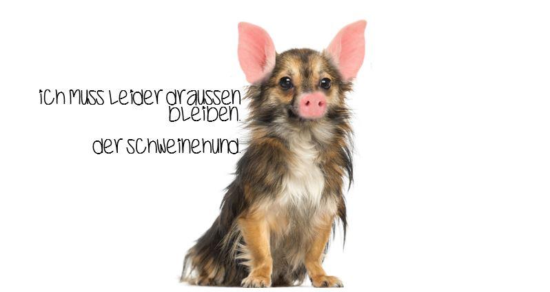 Schweinehund umständehalber abzugeben